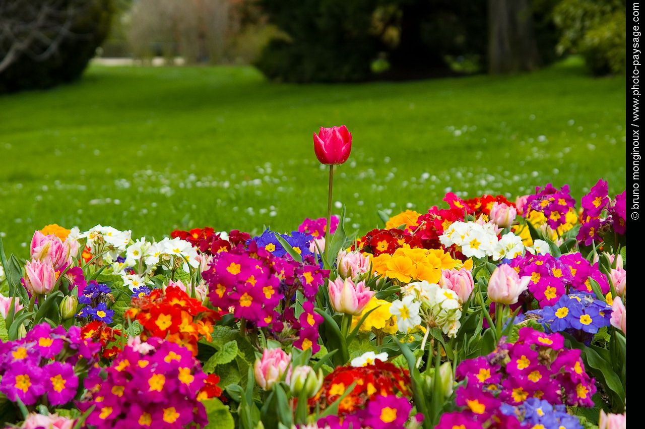 Photo Printemps Fond Ecran Fleurs Tulipes Primeveres De L Album Images Diverses