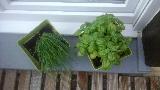le jardinage - Page 2 Mini_150825065438897213532524