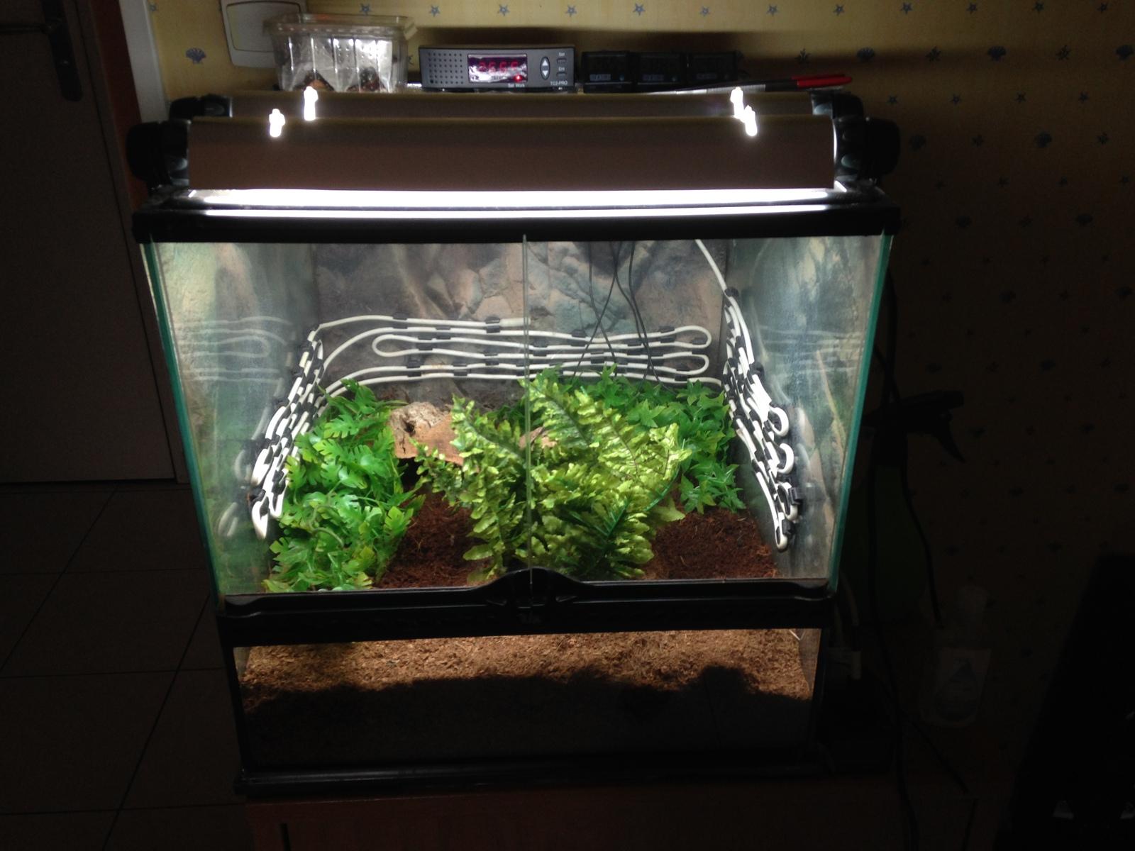 Pac Man Frog Set Up Pics