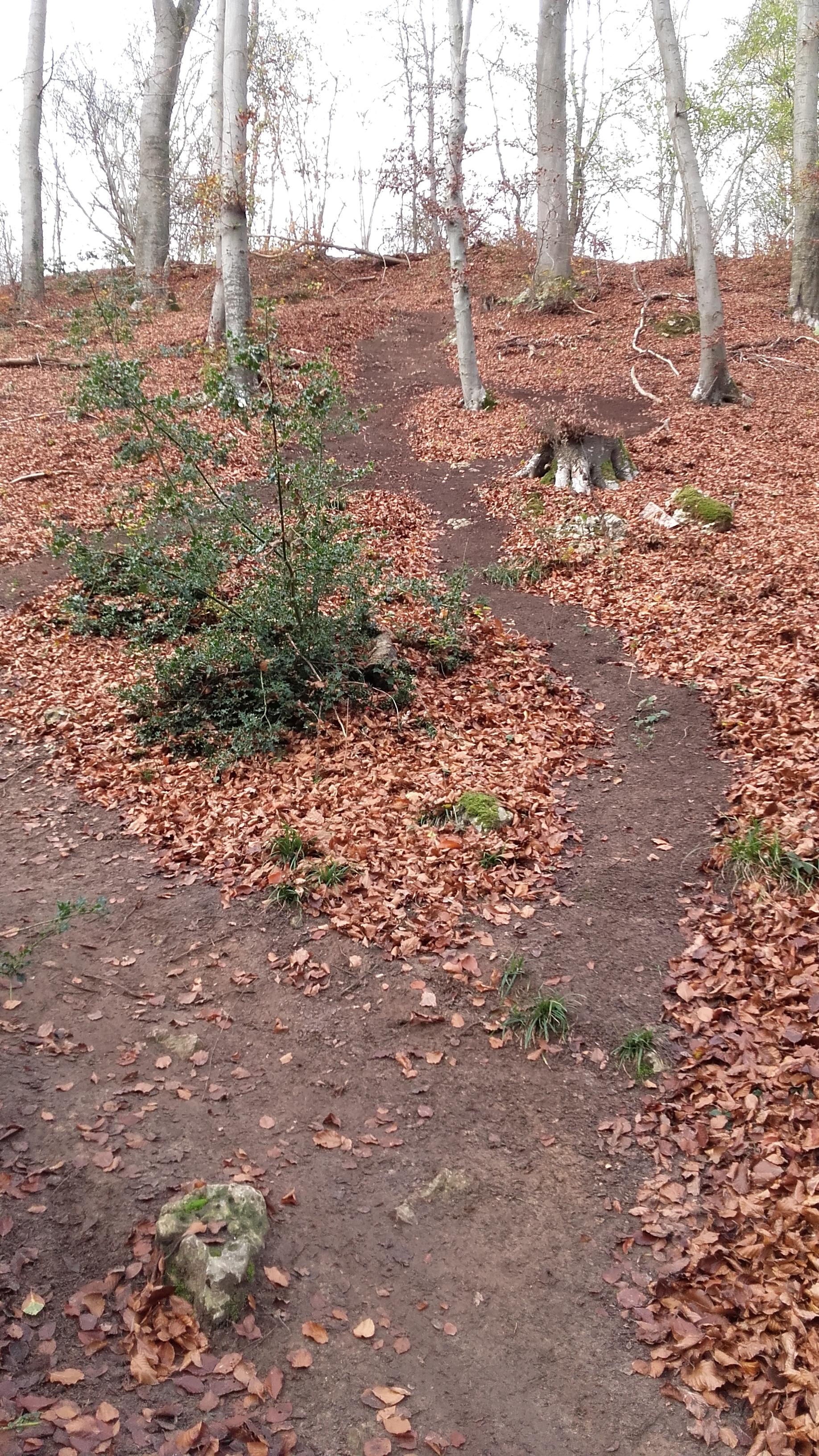 15-11-2015 - Forêt de Hez au départ de Bresles - Page 2 15111407301118301013749268