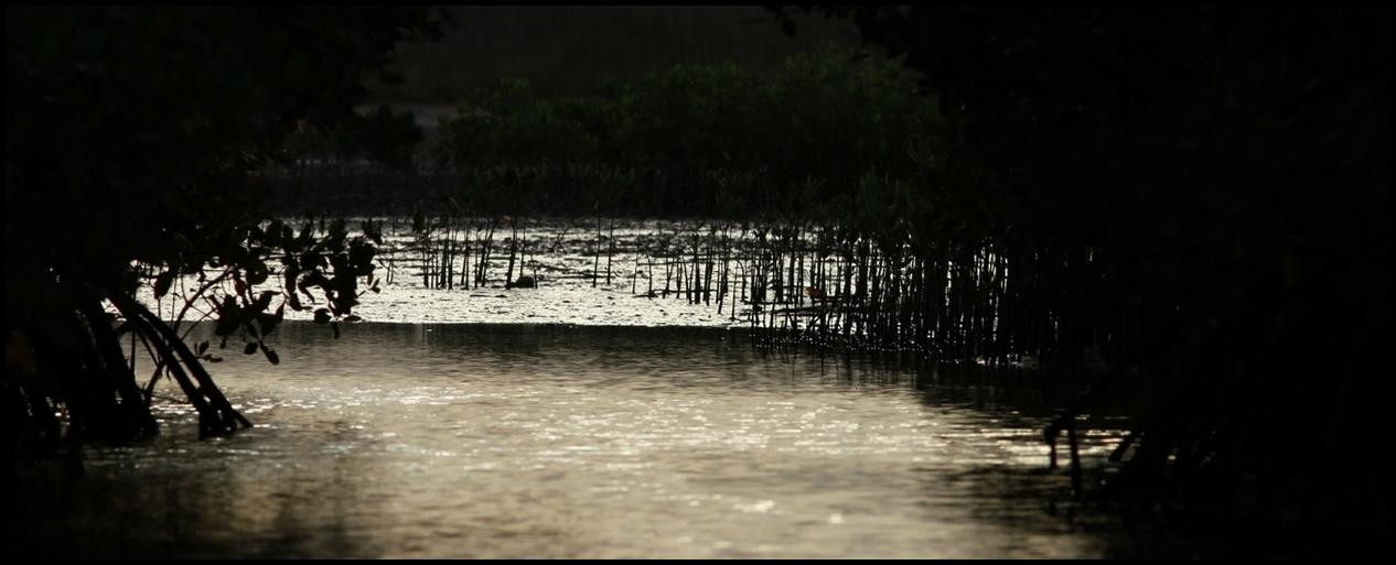 a-Mangrove-IMG_5160