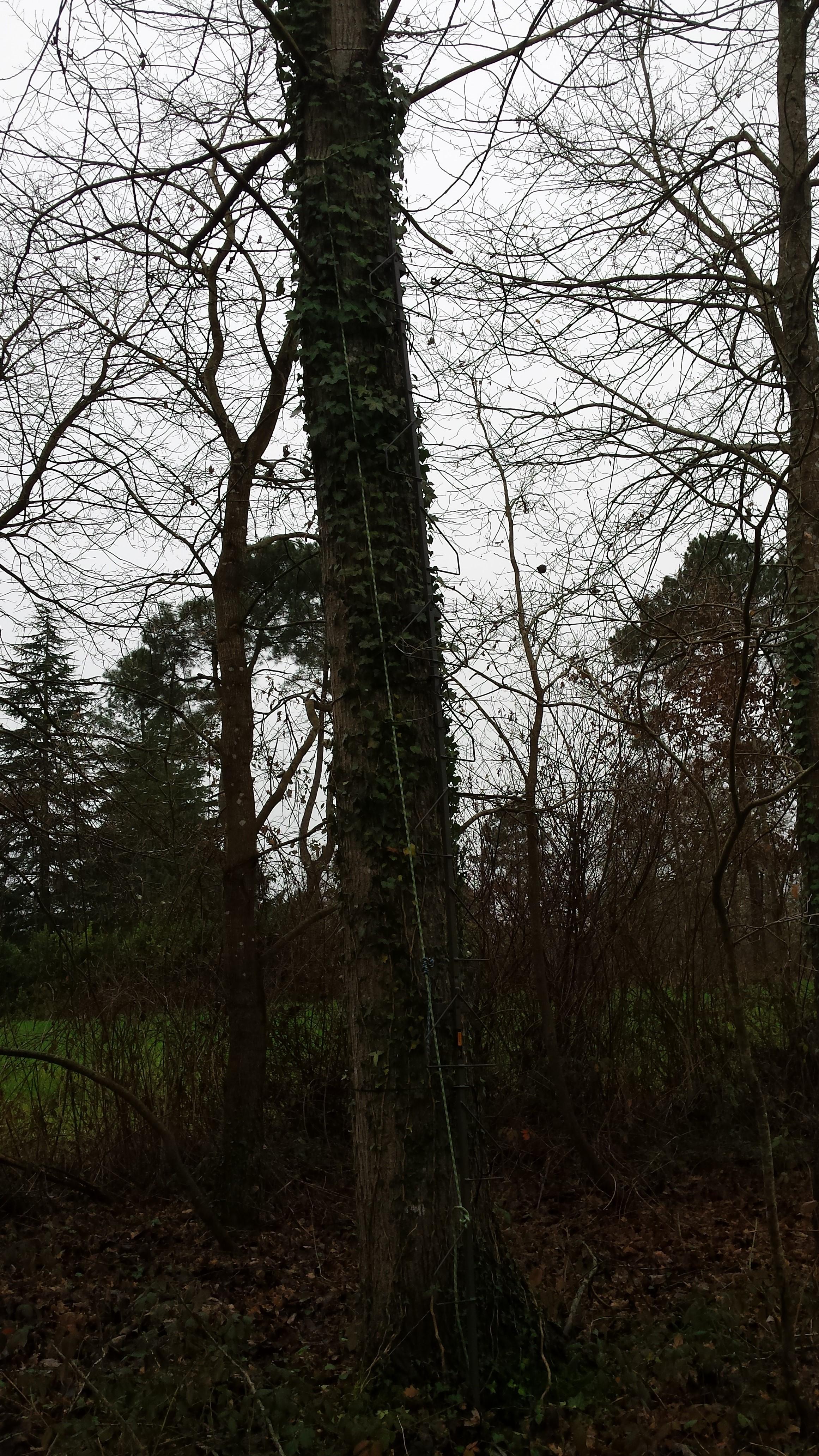 échelle d'affut ou treestand ?  - Page 2 16010408053720960413874498