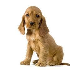 [Douane/Animaux] Formalité et conseils pour partir avec des chiens  16011011254318477113886440