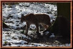 Lynx commun - lynxcommun28