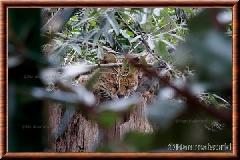 Serval - serval13