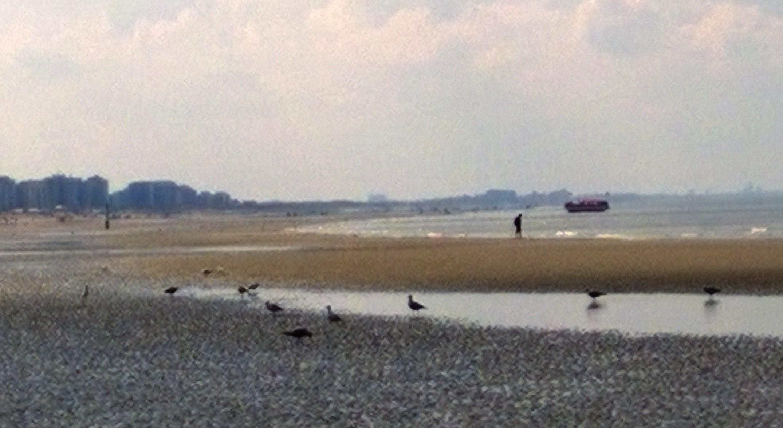 Les Bateaux Amphibies d'excursions en mer des plages belges - Page 4 1604160754228903514148774