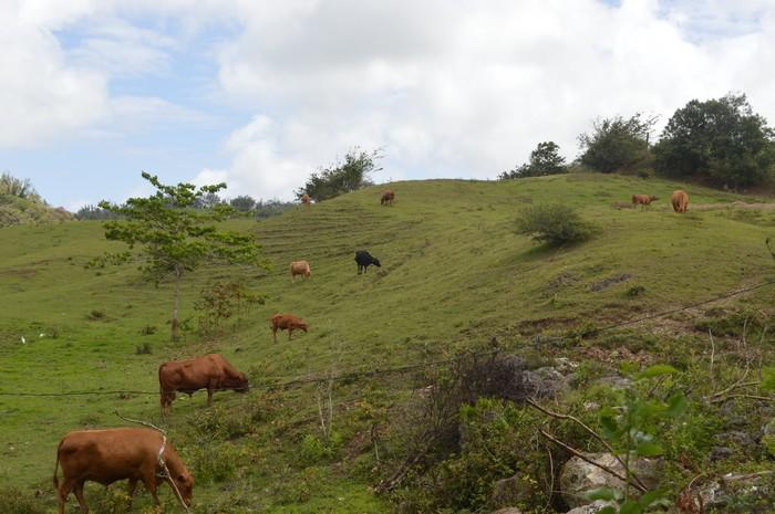Où paissent les vaches paisibles... 16041706221117181814158127