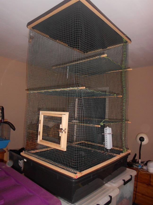 Voici la maison de mes ratounes :) 16042409005420071514177024