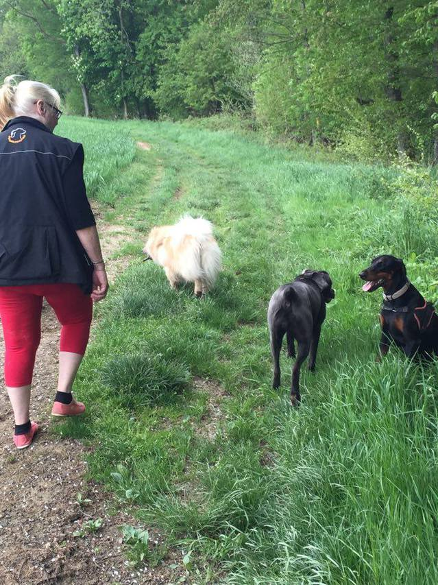 Balades canines Sarrebourg (57) - Page 2 16051209583717298914223163