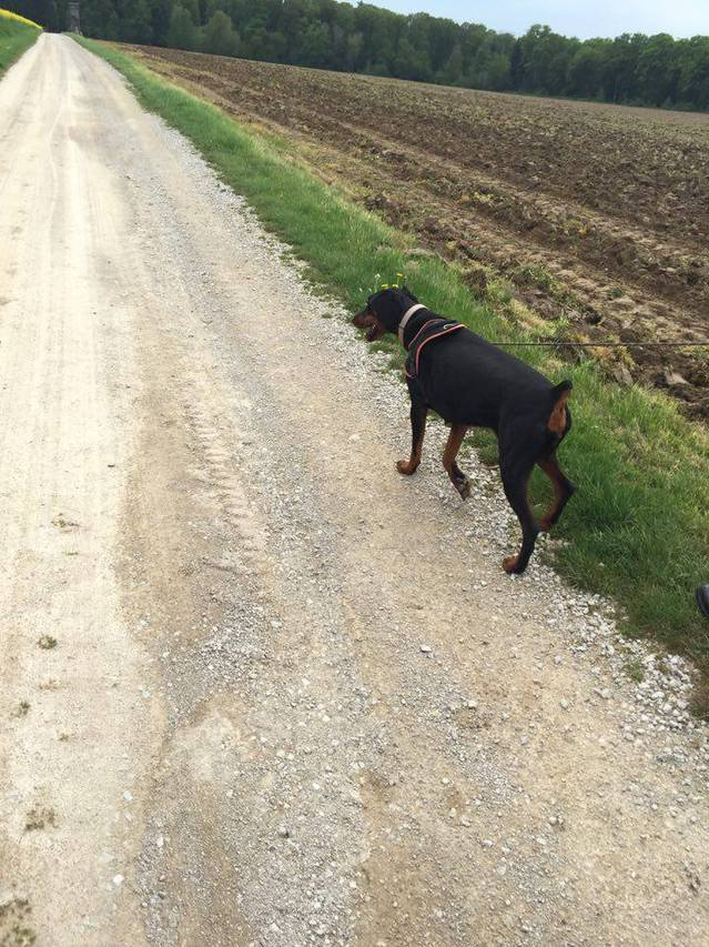 Balades canines Sarrebourg (57) - Page 2 16051209583917298914223164