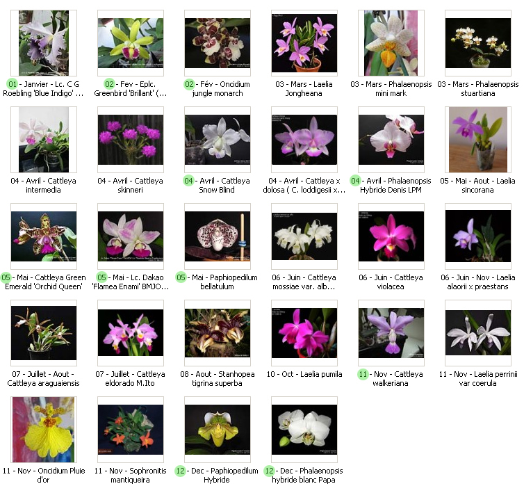 époques de floraison 16051904021418325014238517