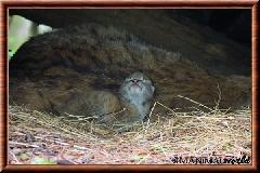 Lynx commun - lynx commun 48