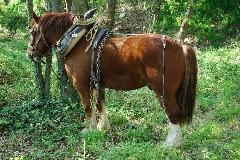 CAVAILLON Les chevaux de trait - 20151209180952-9e8f022e