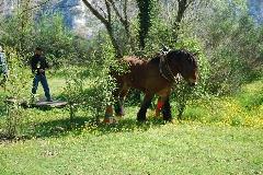 CAVAILLON Les chevaux de trait - 20151209180953-df7466d4