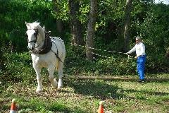 CAVAILLON Les chevaux de trait - 20151209180956-15877cfc