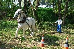 CAVAILLON Les chevaux de trait - 20151209180957-35934051