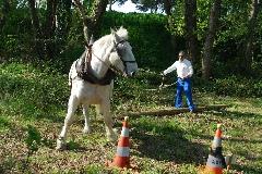 CAVAILLON Les chevaux de trait - 20151209180958-0faf6d2c