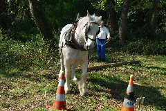 CAVAILLON Les chevaux de trait - 20151209180959-88846984