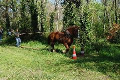 CAVAILLON Les chevaux de trait - 20151209181003-3a237d18