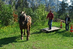 CAVAILLON Les chevaux de trait - 20151209181007-e07aab9c