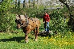 CAVAILLON Les chevaux de trait - 20151209181010-e73d7897