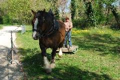 CAVAILLON Les chevaux de trait - 20151209181017-09388cbb