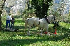 CAVAILLON Les chevaux de trait - 20151209181019-9722a2e7