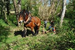 CAVAILLON Les chevaux de trait - 20151209181023-c29540a3