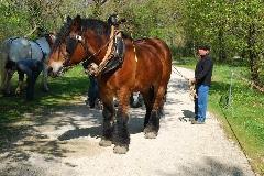 CAVAILLON Les chevaux de trait - 20151209181028-88301309
