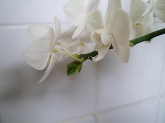 keiki sur fleurs ? 16092502370520151714514606