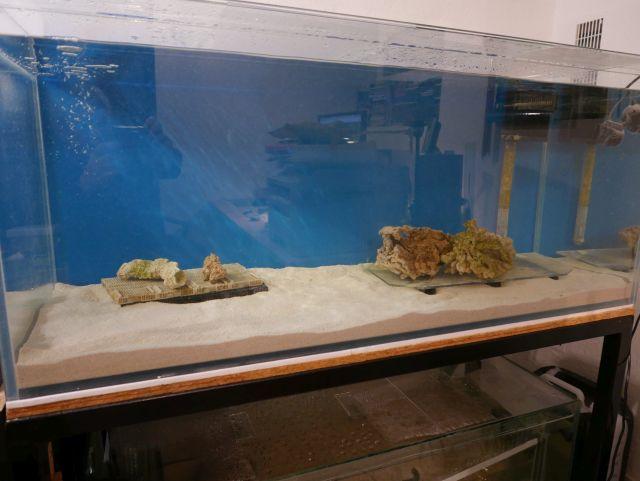 Aquarium 380 L total en système Jaubert déporté + ATS 16110710335213025714616115