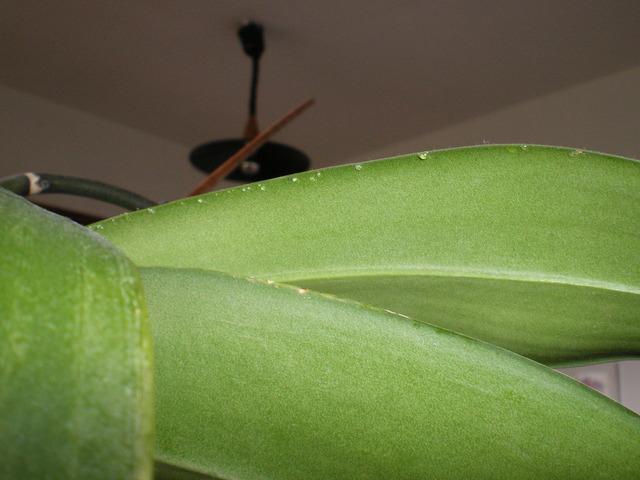 pollinisateurs indigènes 16120904381120151714695610