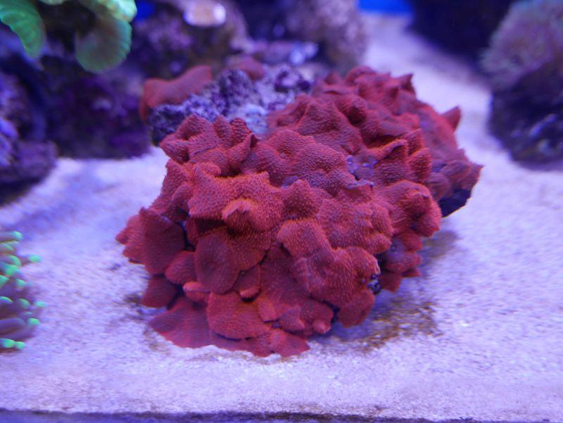 Aquarium 380 L total en système Jaubert déporté + ATS 16121210291613025714703974