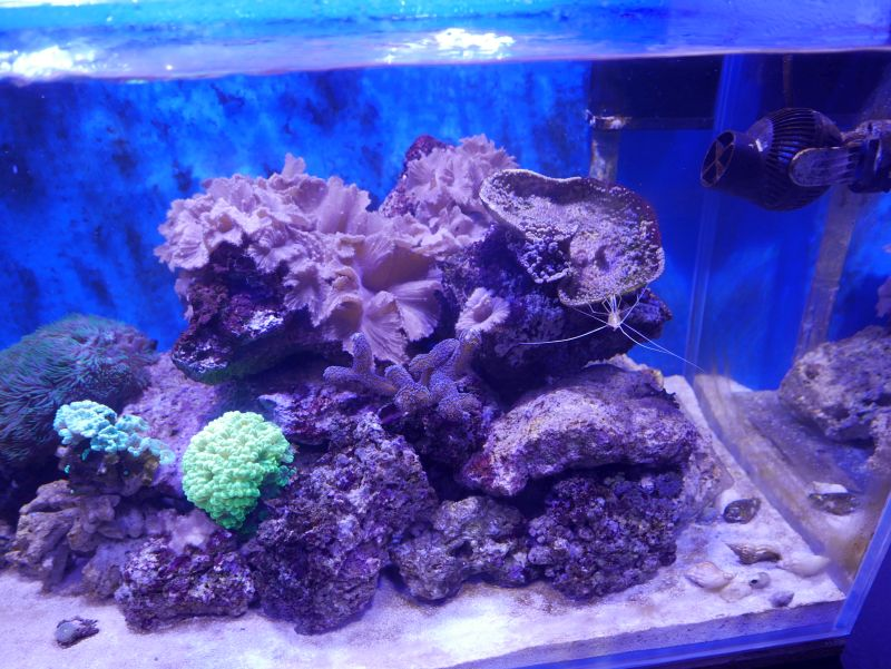 Aquarium 380 L total en système Jaubert déporté + ATS 16121210291713025714703975