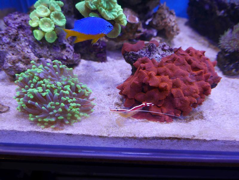 Aquarium 380 L total en système Jaubert déporté + ATS 16121210291813025714703977