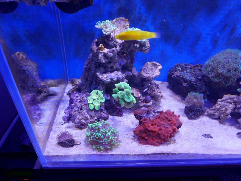 Aquarium 380 L total en système Jaubert déporté + ATS 16121210291813025714703978