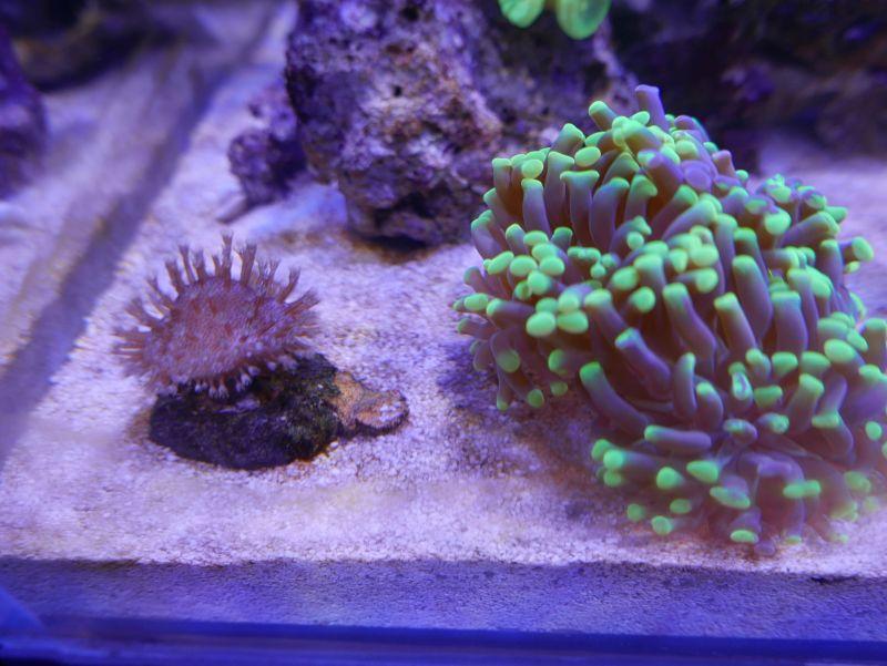 Aquarium 380 L total en système Jaubert déporté + ATS 16121210291913025714703979