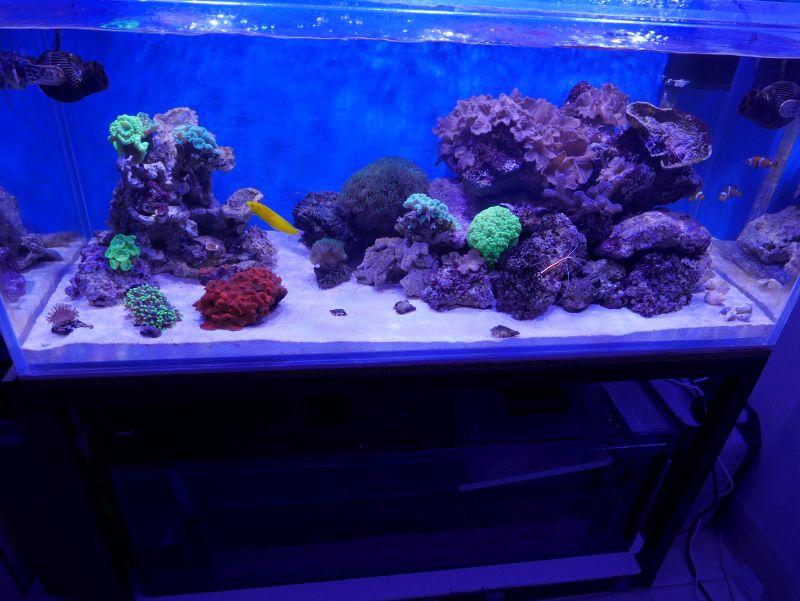 Aquarium 380 L total en système Jaubert déporté + ATS 16122006245013025714718310