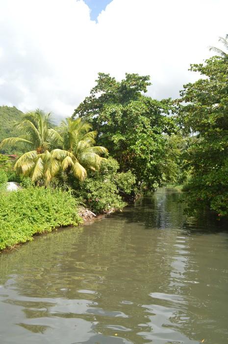 Faire pousser des arbres dans l espace ni ombre ni lumi re - Faire pousser des endives dans l eau ...