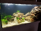 "Mon premier ""Aquascaping"" 250L - Page 2 Mini_17010809322122522314758845"