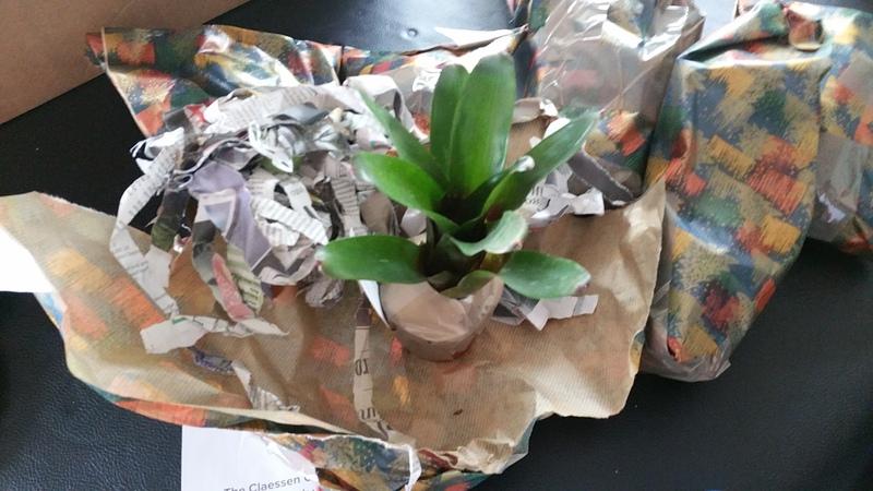 Bromelias - Orchidés en VPC 17010902025622496414760698