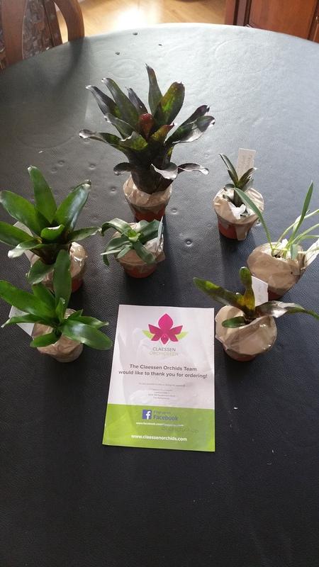 Bromelias - Orchidés en VPC 17010902031122496414760707