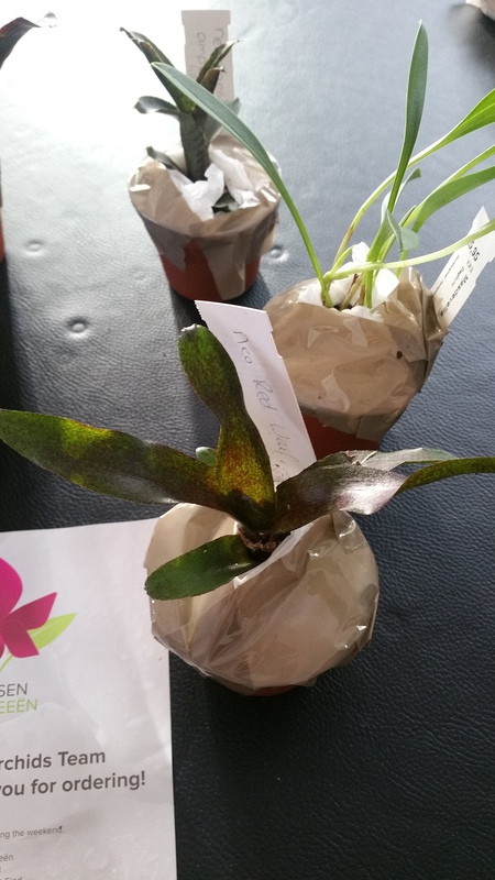 Bromelias - Orchidés en VPC 17010902031422496414760708