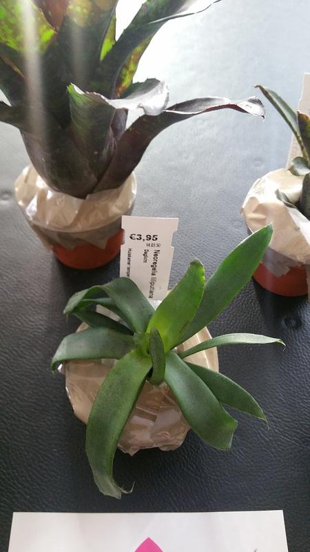 Bromelias - Orchidés en VPC 17010902032122496414760710