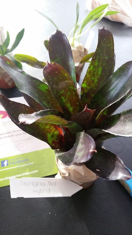 Bromelias - Orchidés en VPC 17010902033222496414760712