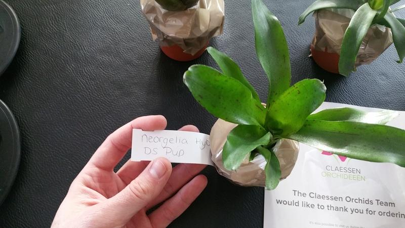 Bromelias - Orchidés en VPC 17010902033522496414760715
