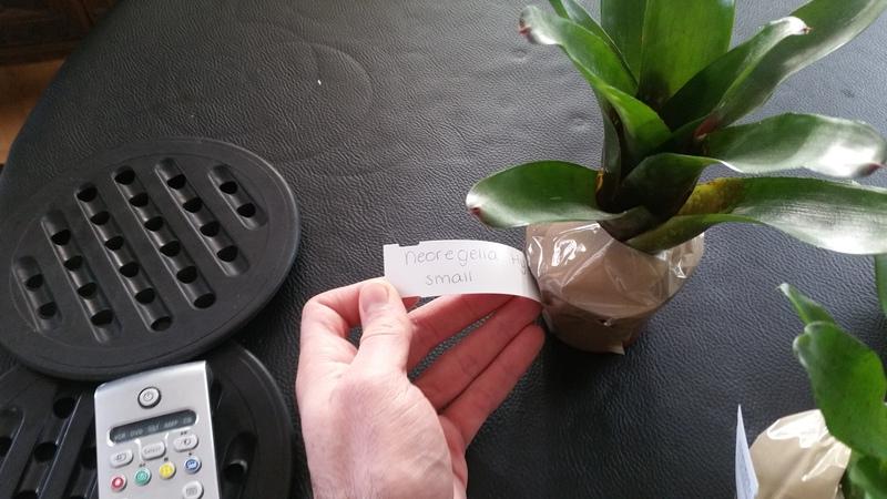 Bromelias - Orchidés en VPC 17010902033722496414760716