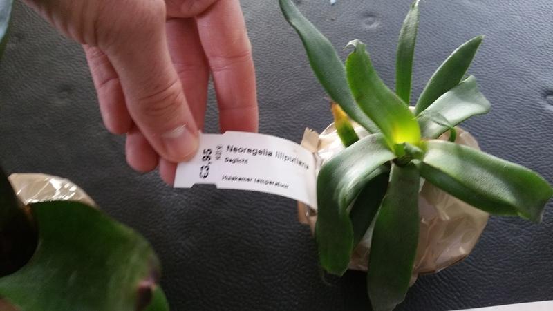 Bromelias - Orchidés en VPC 17010902034122496414760717