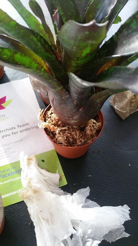 Bromelias - Orchidés en VPC 17010902035022496414760719