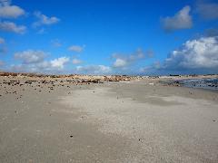 Album Tourisme à et autour de Lesconil - Image 0 - Lesconil - Plage des sables blancs à marée basse en fév